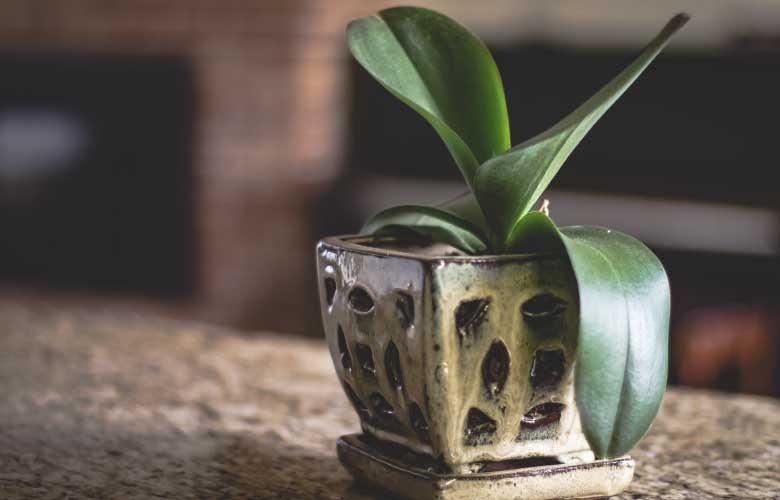 Cachepot de Cerâmica | westwing.com.br