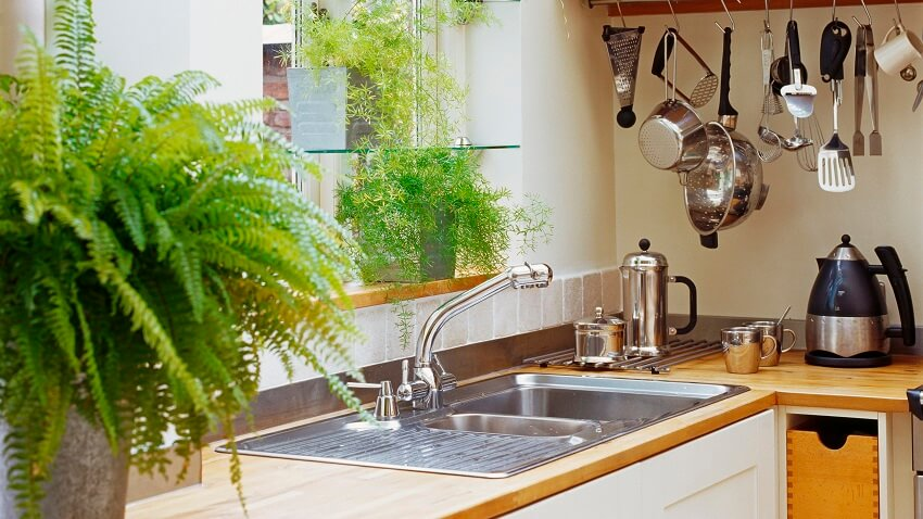 Plantas para Cozinha | westwing.com.br