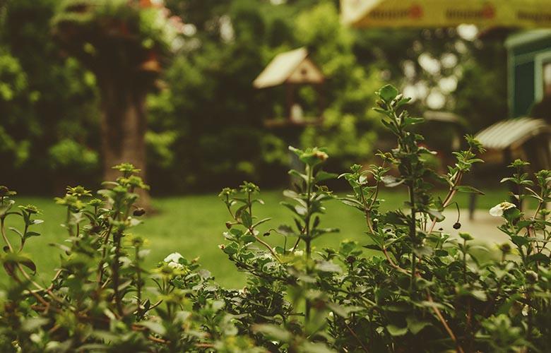 Plantas para Jardim | westwing.com.br