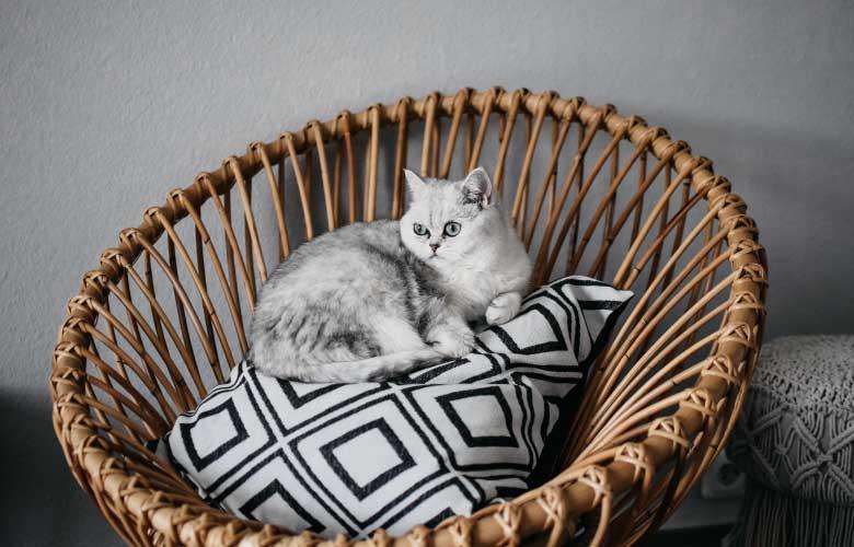 Cadeiras de Vime   westwing.com.br