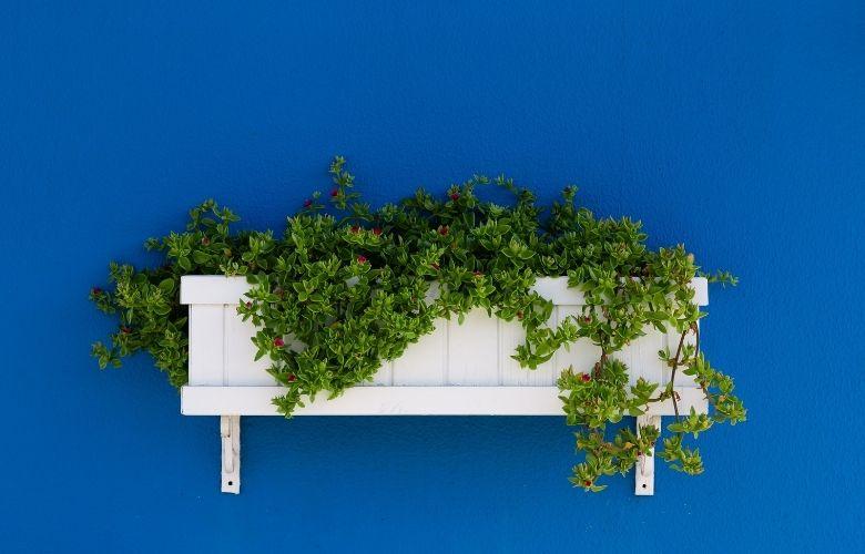 Flores para Jardineira | westwing.com.br