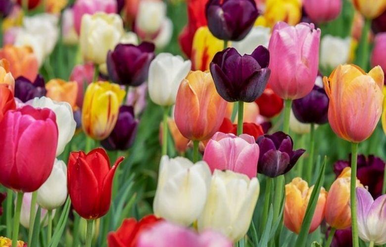 Flores do Inverno   westwing.com.br