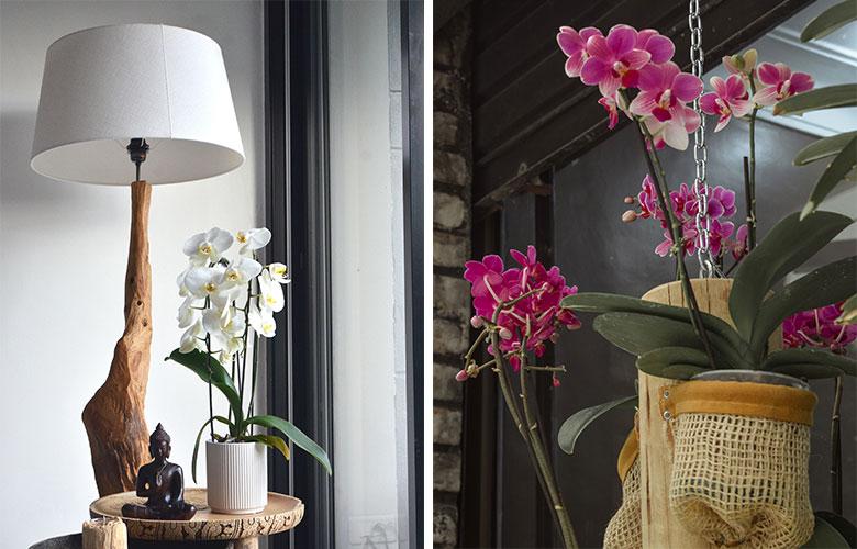 Flores Tropicais   westwing.com.br