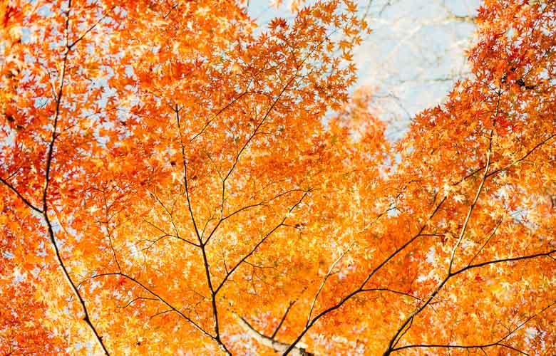 Tendências de Outono | westwing.com.br
