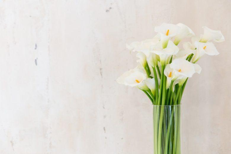 Flor Copo de Leite | westwing.com.br