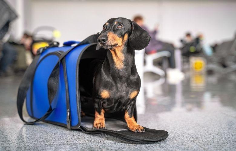 Bolsa de Cachorro | westwing.com.br