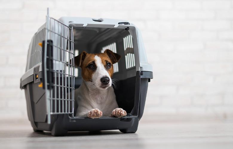 Caixa de Transporte para Cachorro | westwing.com.br