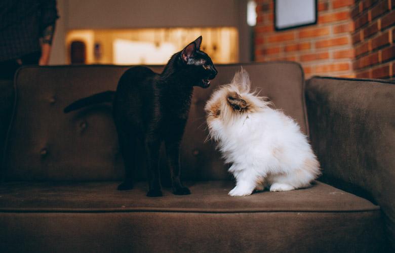 Animais de Estimação para Apartamento | westwing.com.br
