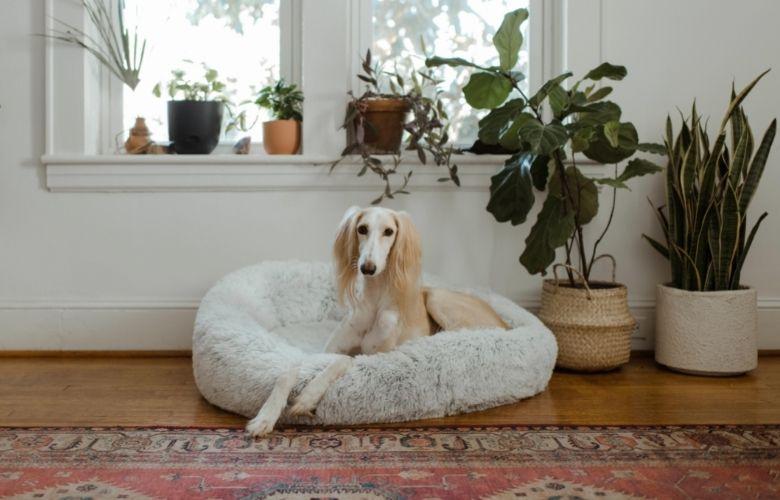 Cama para Cachorro | westwing.com.br