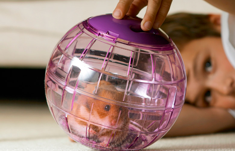 Brinquedos para Hamster   westwing.com.br