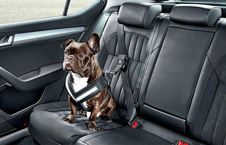 Cinto de Segurança para Cachorro | westwing.com.br