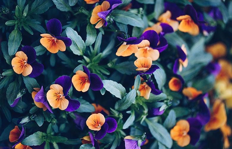 Flor Amor Perfeito | westwing.com.br