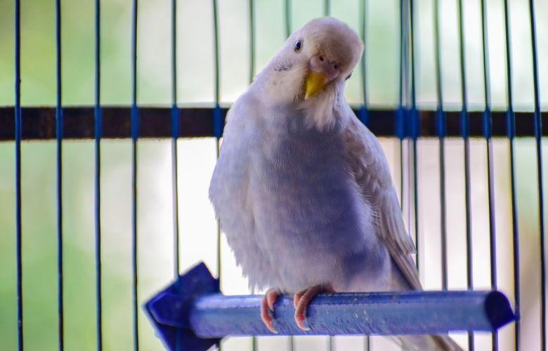 Gaiola para Pássaros   westwing.com.br