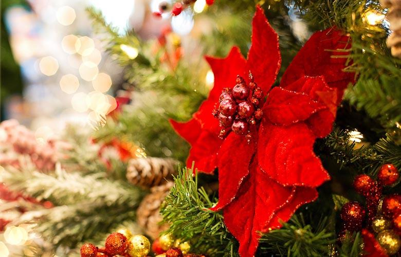 Flores de Natal   westwing.com.br