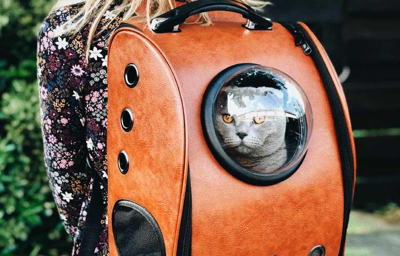 Bolsa de Transporte para Gatos | westwing.com.br