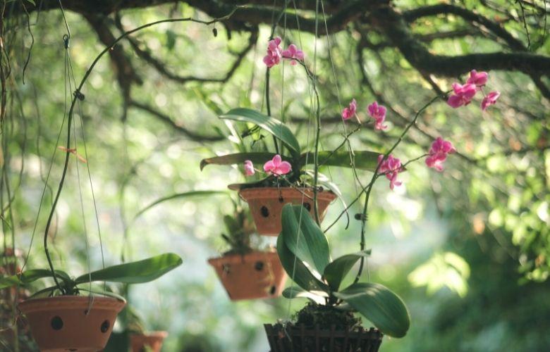 Orquidário | westwing.com.br