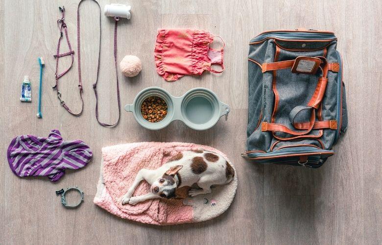 Acessórios para Cachorros | westwing.com.br