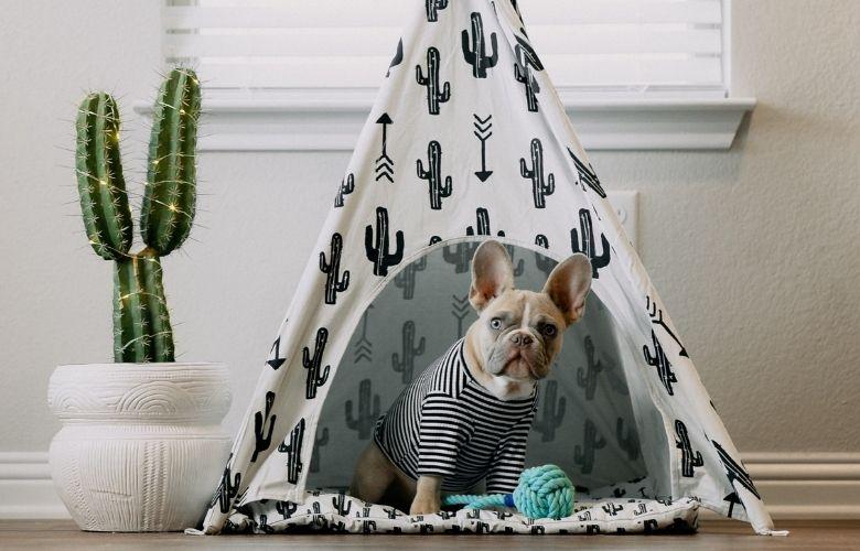 Como Decorar Casinha de Cachorro   westwing.com.br