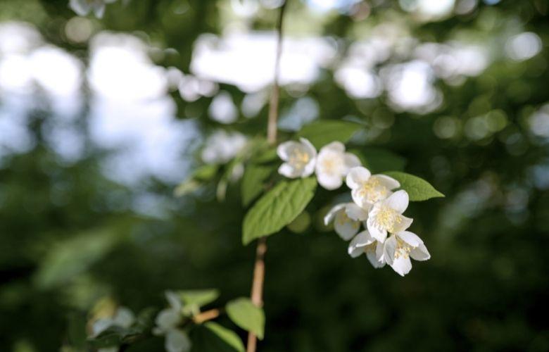 Flores de Primavera | westwing.com.br