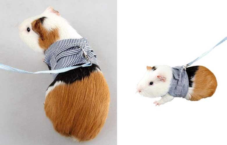 Coleira para Hamster | westwing.com.br