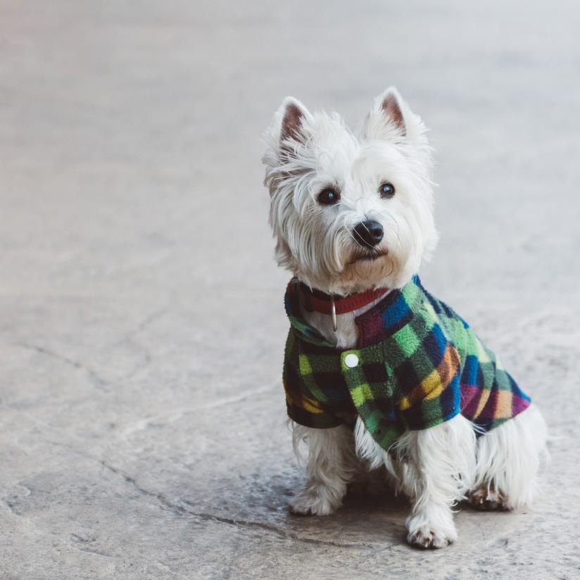 Como Fazer Roupa para Cachorro | westwing.com.br