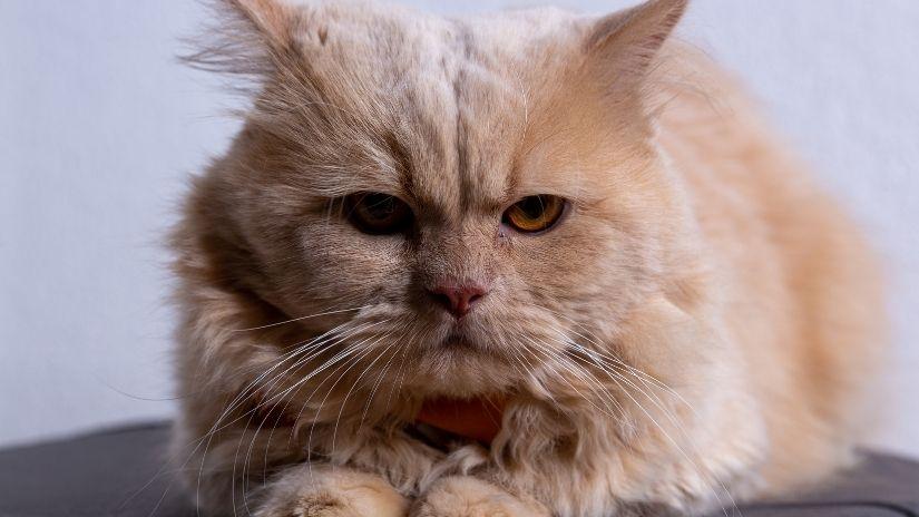 Gatos em Apartamento | westwing.com.br
