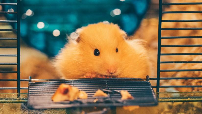 Gaiola para Hamster   westwing.com.br