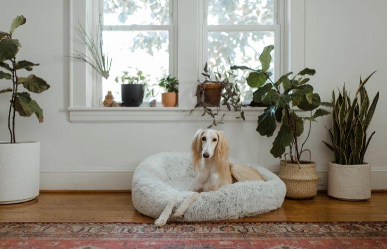 Piso para Cachorro | westwing.com.br