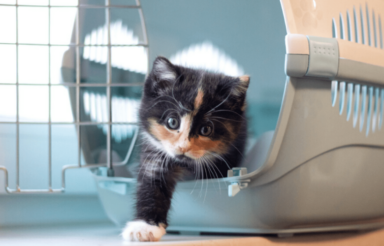 Caixa de Transporte para Gatos | westwing.com.br