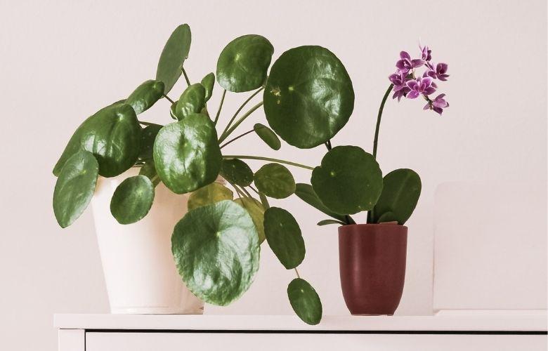 Flores para Vasos Pequenos | westwing.com.br