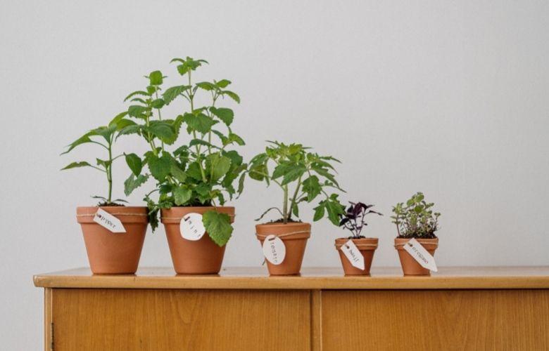Plantas Daninhas | westwing.com.br