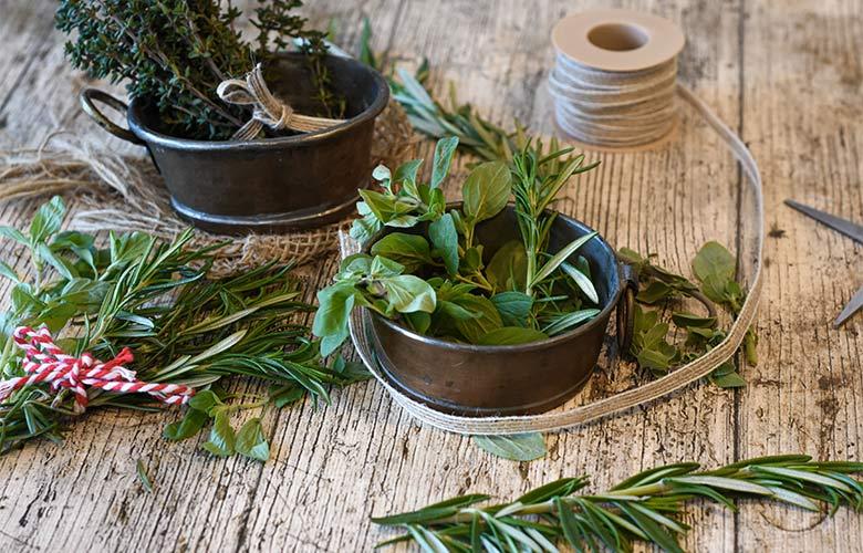 Plantas Medicinais Brasileiras | westwing.com.br