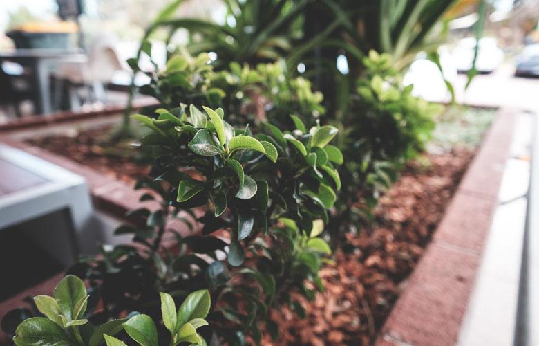 Como Escolher Plantas para Canteiros? | westwing.com.br