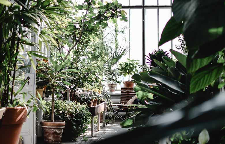 Plantas para Jardim de Inverno | westwing.com.br