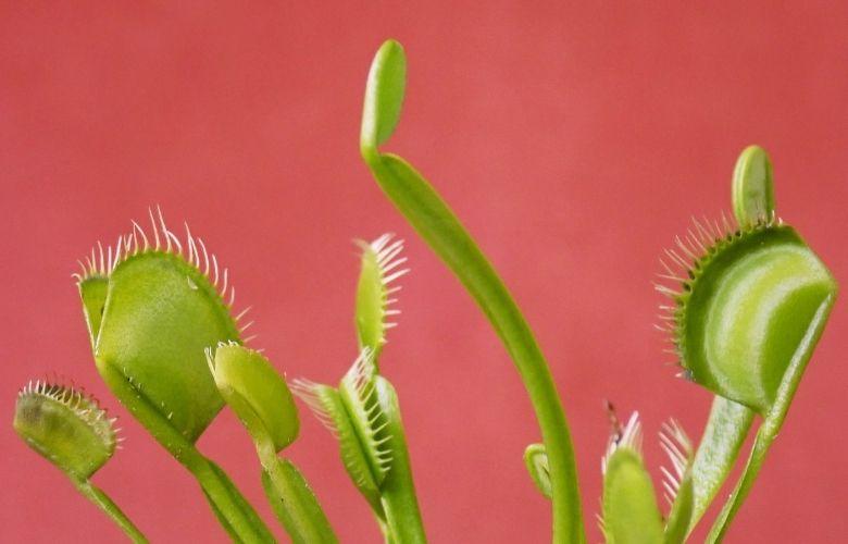 Plantas Exóticas | westwing.com.br