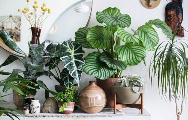 Plantas Brasileiras | westwing.com.br