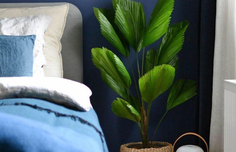Licuala   westwing.com.br