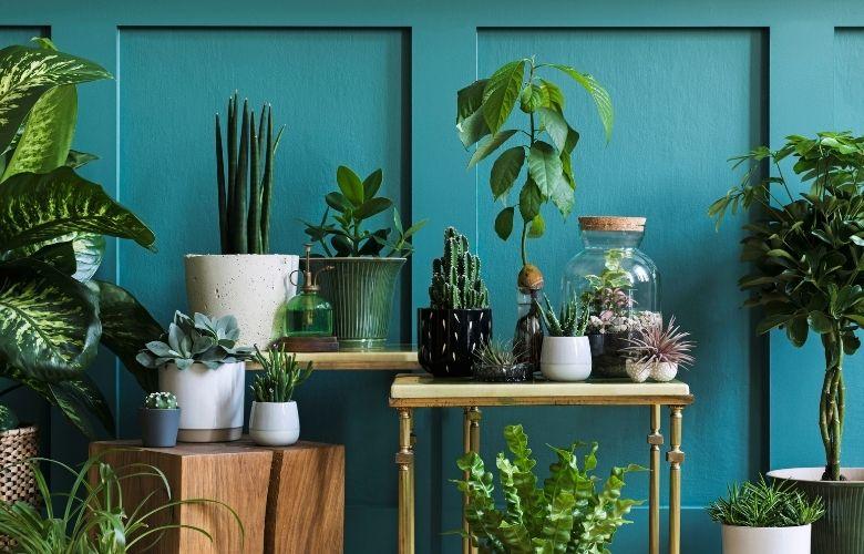 Plantas para Jardim Pequeno   westwing.com.br