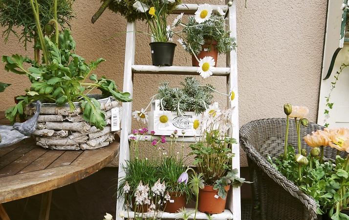 como montar um jardim pequeno