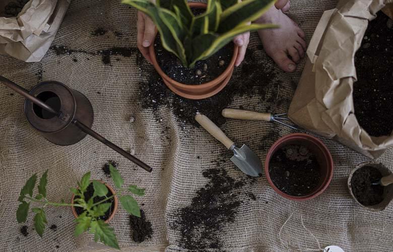 Jardinagem | westwing.com.br
