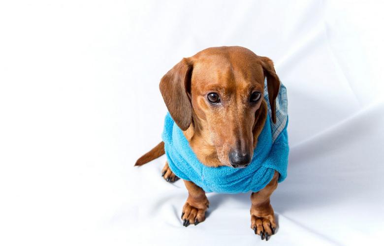 Roupas para Cachorro | westwing.com.br