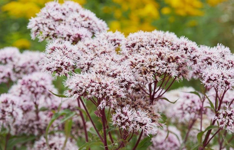 Planta Valeriana | westwing.com.br