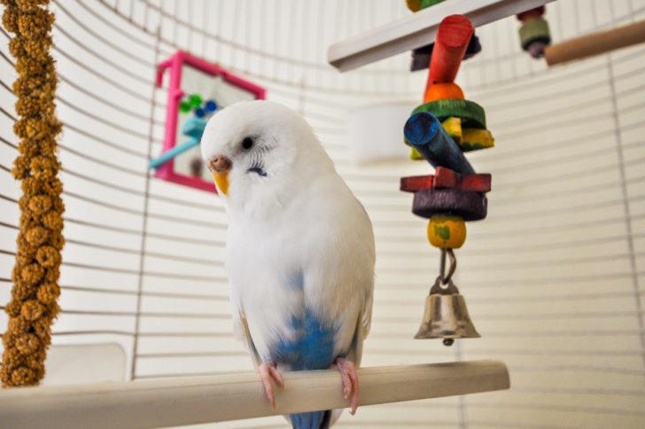 Comida para Pássaros   westwing.com.br