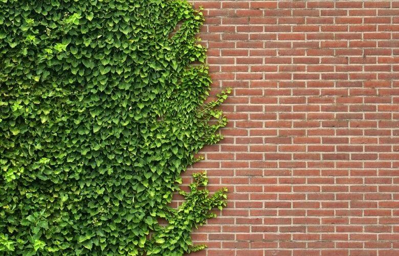 Como Plantar Trepadeiras   westwing.com.br