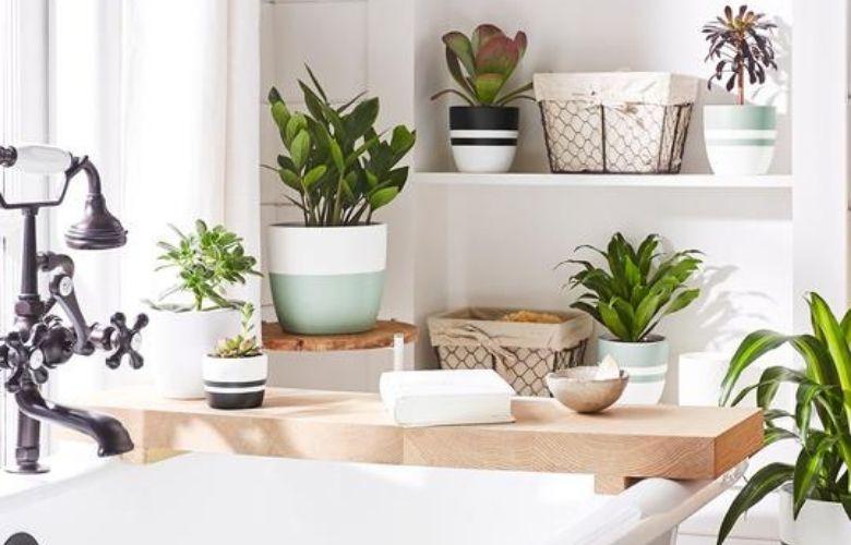 Planta Dracena | westwing.com.br
