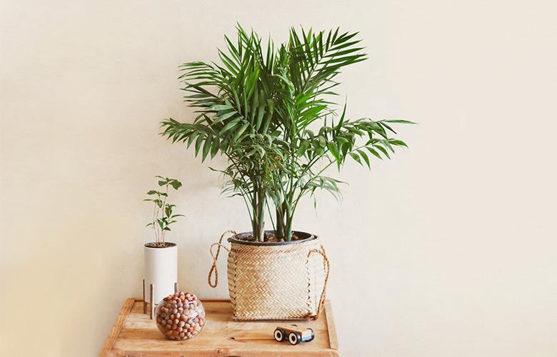 Palmeira Bambu   westwing.com.br