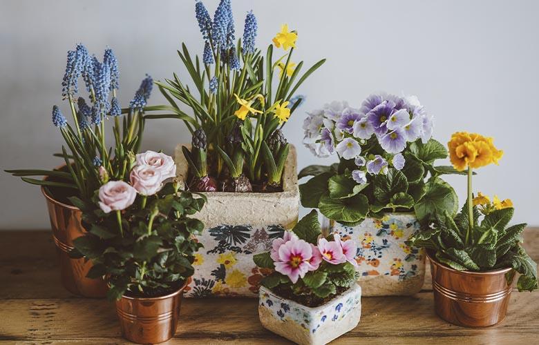 Flores Coloridas | westwing.com.br
