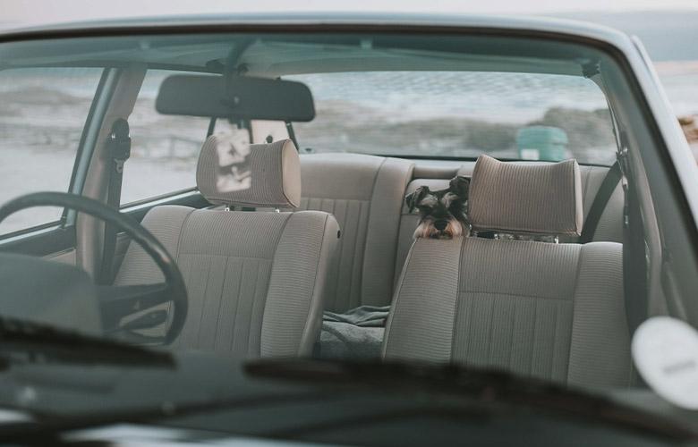Assento para Cachorro   westwing.com.br