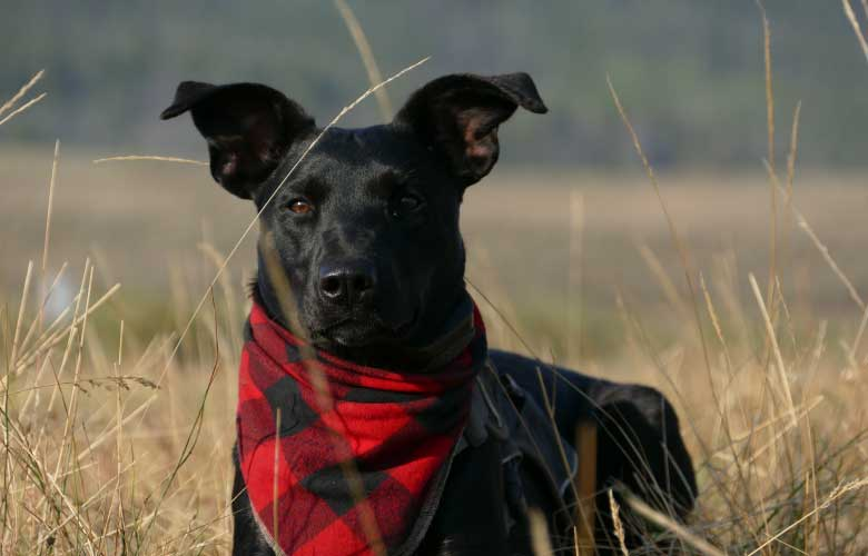 Bandana para Cachorro | westwing.com.br