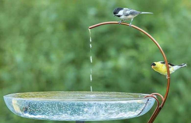 Bebedouro para Pássaros | westwing.com.br